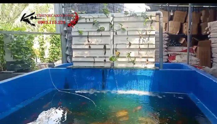 baki lọc nước hồ koi